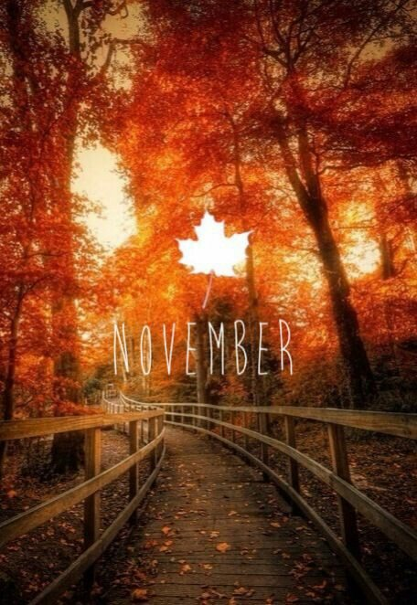 Fall leaves November LuxuryMovers newsletter