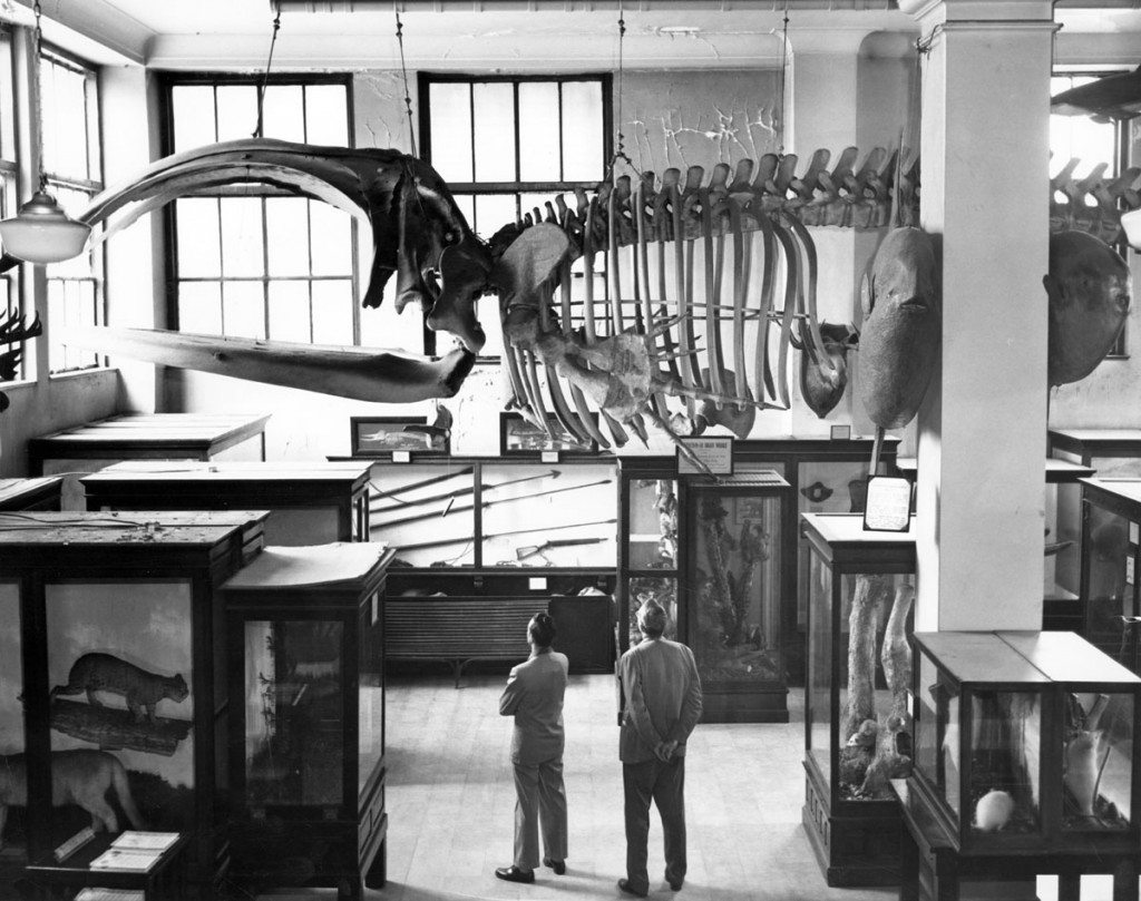 Skeletal Exhibits, Museum of Natural History, 1950s-1960s. - LuxuryMovers Real Estate Raleigh NC